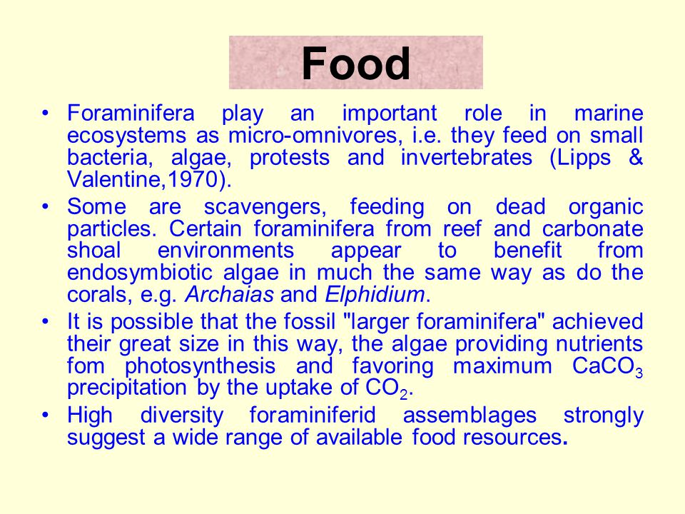 Food Foraminifera play an important role in marine ecosystems as micro-omnivores, i.e.