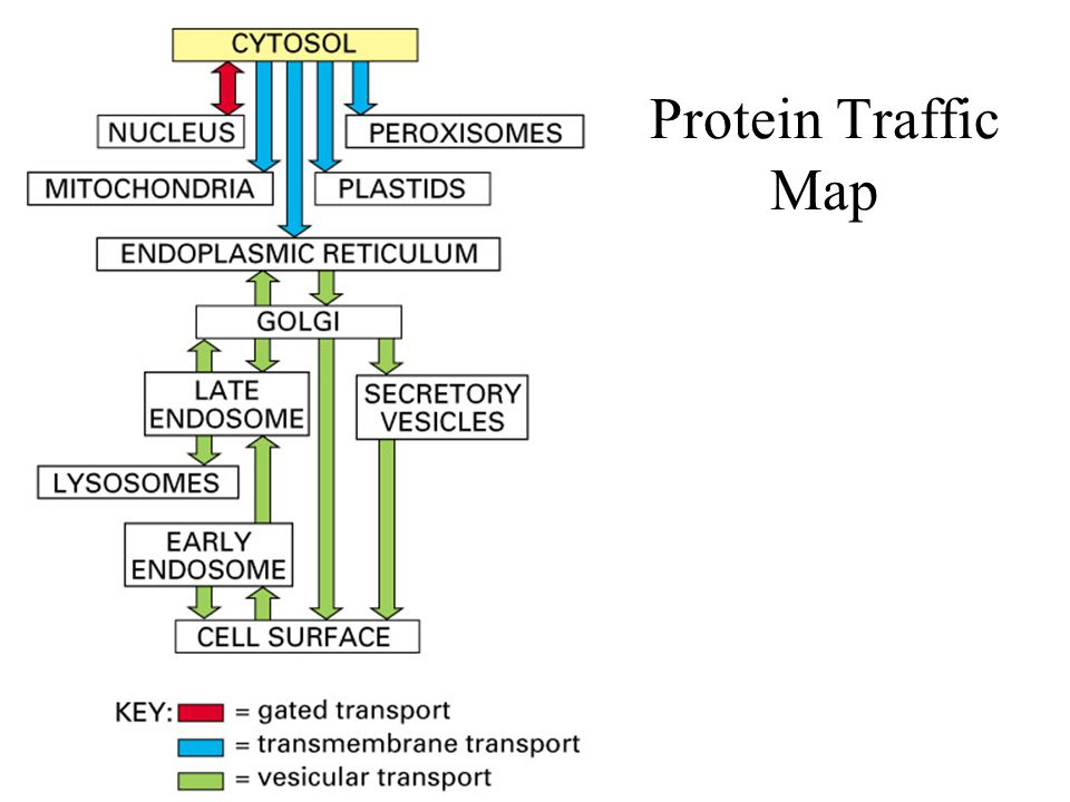 Protein Traffic Map