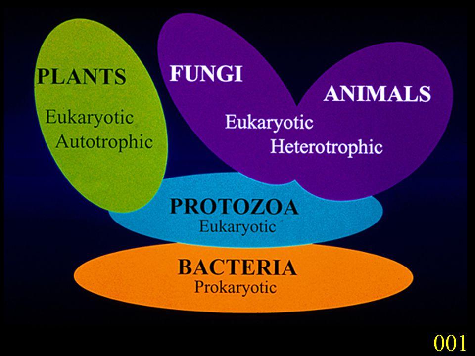 Saprobes and parasites (especially of plants), terrestrial; cosmopolitan (~22,224 species).
