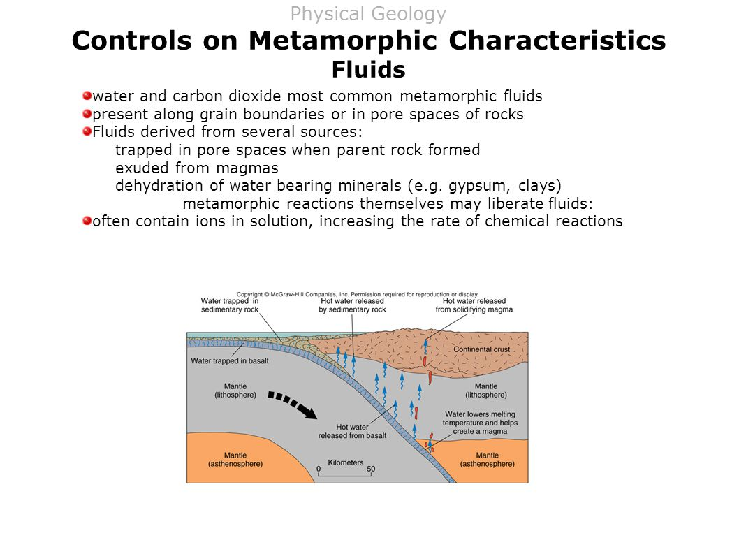 Controls on Metamorphic Characteristics Fluids water and carbon dioxide most common metamorphic fluids present along grain boundaries or in pore spaces of rocks Fluids derived from several sources: trapped in pore spaces when parent rock formed exuded from magmas dehydration of water bearing minerals (e.g.