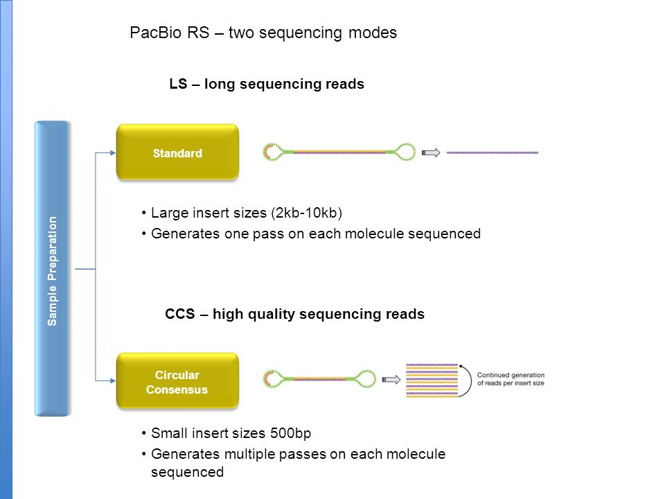 Sample Preparation LS – long sequencing reads Large insert sizes (2kb-10kb) Generates one pass on each molecule sequenced Small insert sizes 500bp Generates multiple passes on each molecule sequenced Standard Circular Consensus CCS – high quality sequencing reads PacBio RS – two sequencing modes