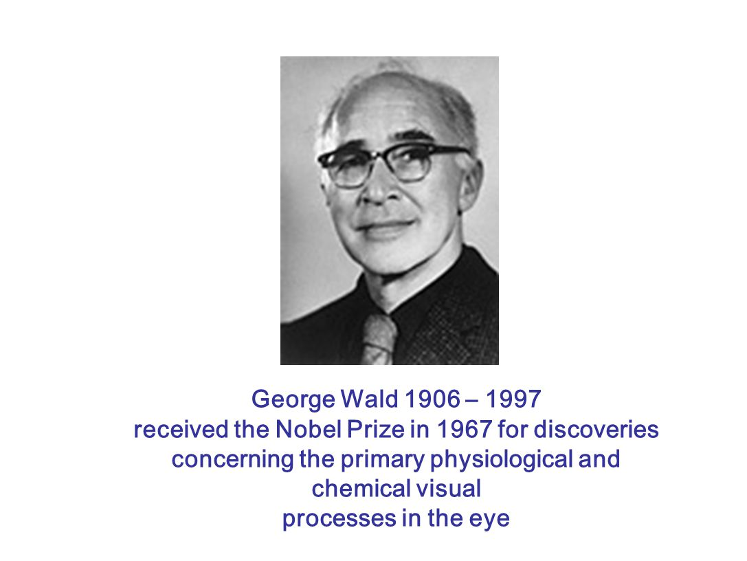 George Wald 1906 – 1997 received the Nobel Prize in 1967 for discoveries concerning the primary physiological and chemical visual processes in the eye