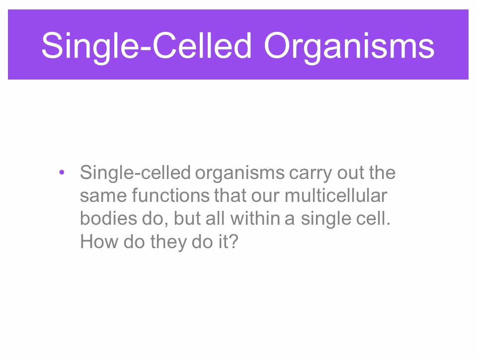 Single-Celled Organisms Single-celled organisms carry out the same functions that our multicellular bodies do, but all within a single cell.