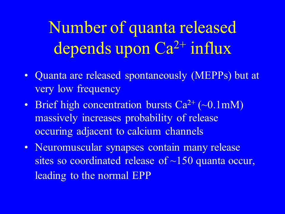 Number of quanta released depends upon Ca 2+ influx Quanta are released spontaneously (MEPPs) but at very low frequency Brief high concentration bursts Ca 2+ (~0.1mM) massively increases probability of release occuring adjacent to calcium channels Neuromuscular synapses contain many release sites so coordinated release of ~150 quanta occur, leading to the normal EPP