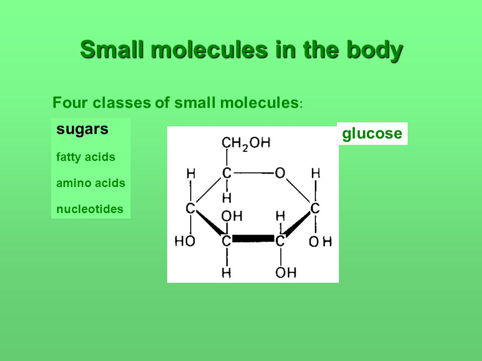 Small molecules in the body Four classes of small molecules : sugars fatty acids amino acids nucleotides glucose