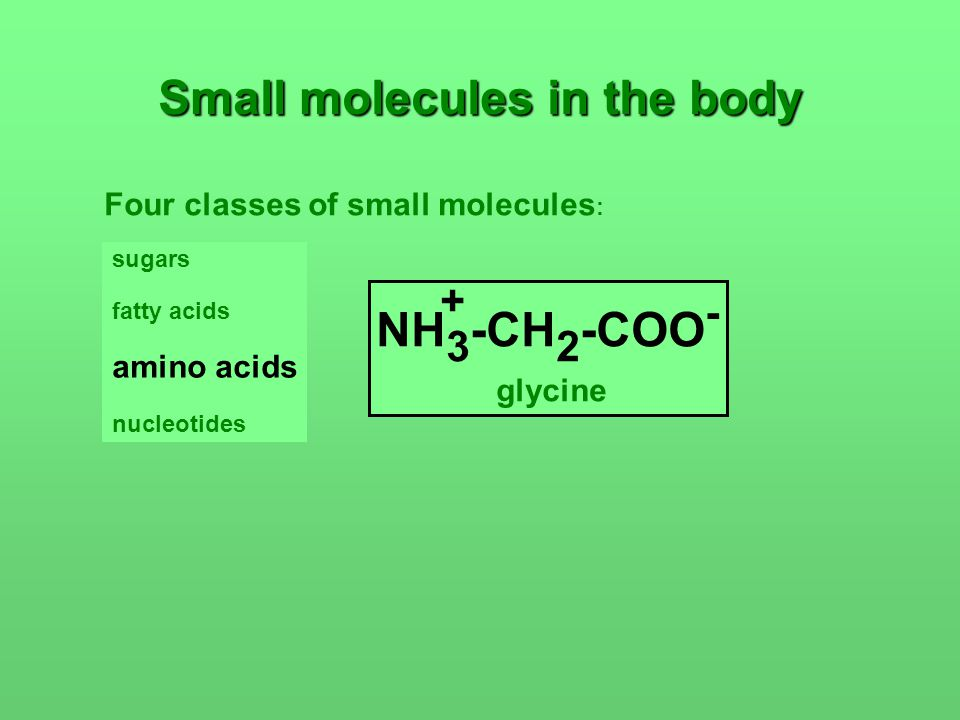 Small molecules in the body Four classes of small molecules : sugars fatty acids amino acids nucleotides NH 3 -CH 2 -COO - + glycine