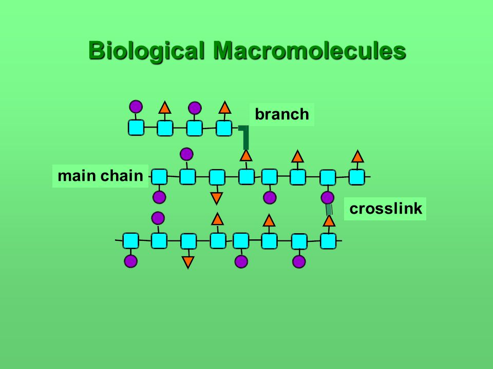 Biological Macromolecules main chain crosslink branch