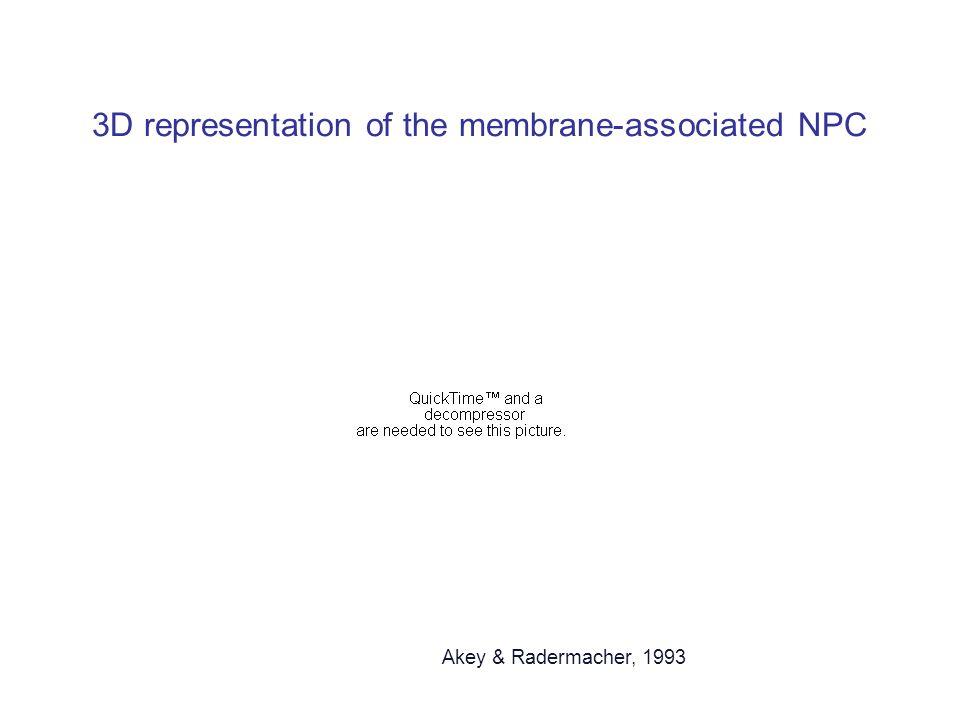 3D representation of the membrane-associated NPC Akey & Radermacher, 1993