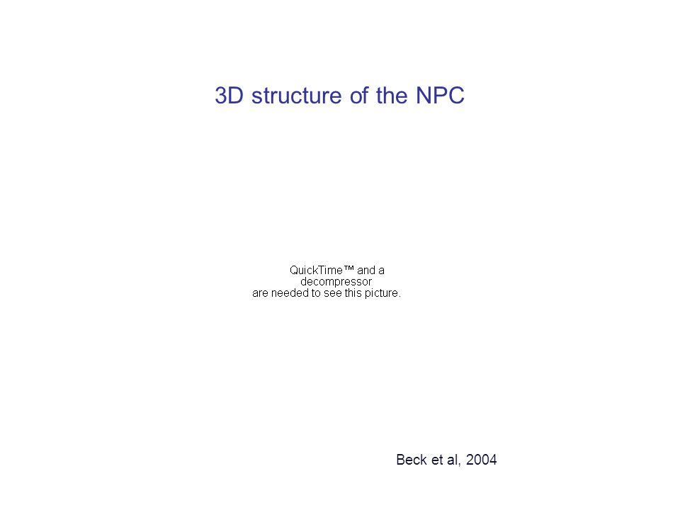 3D structure of the NPC Beck et al, 2004