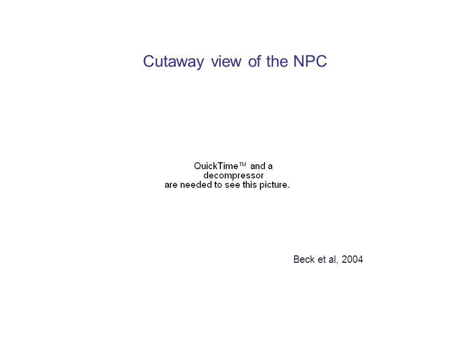 Cutaway view of the NPC Beck et al, 2004