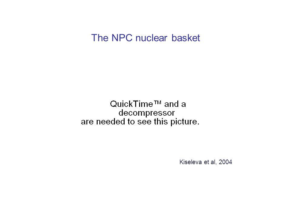The NPC nuclear basket Kiseleva et al, 2004