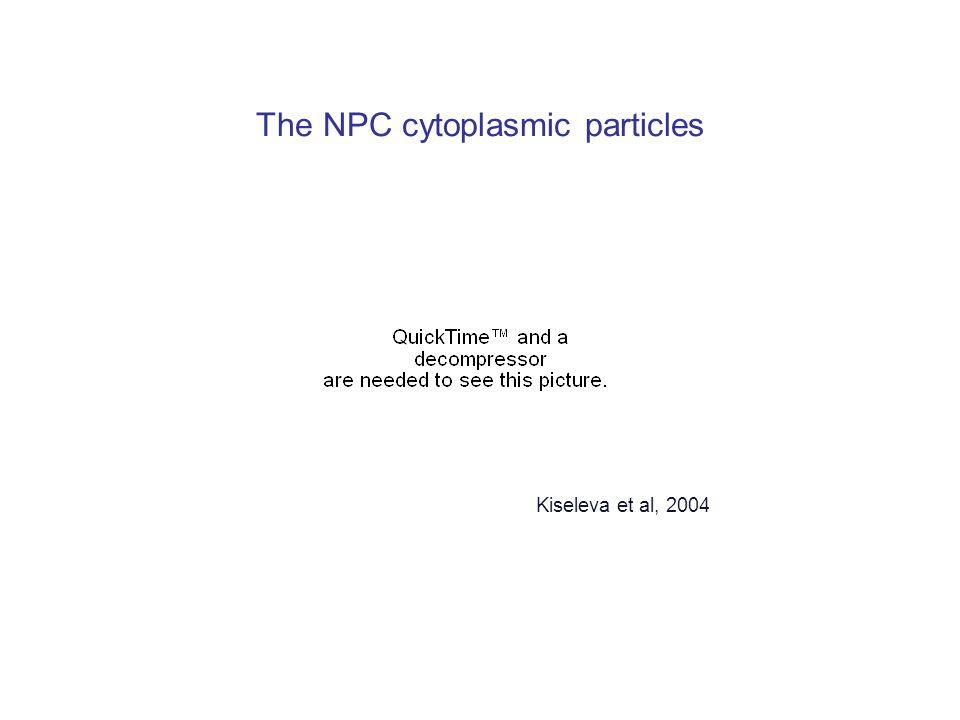 The NPC cytoplasmic particles Kiseleva et al, 2004