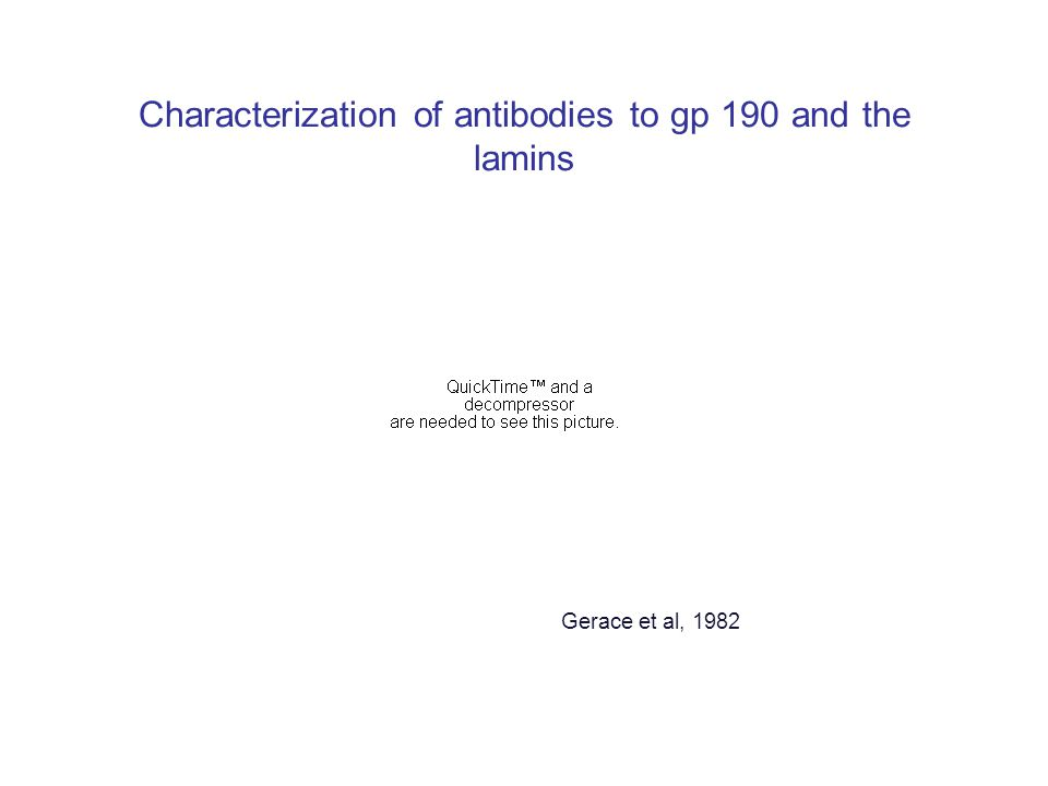 Characterization of antibodies to gp 190 and the lamins Gerace et al, 1982