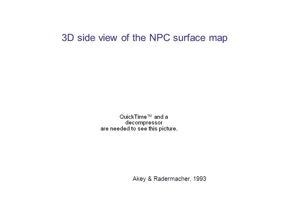 Akey & Radermacher, 1993 3D side view of the NPC surface map