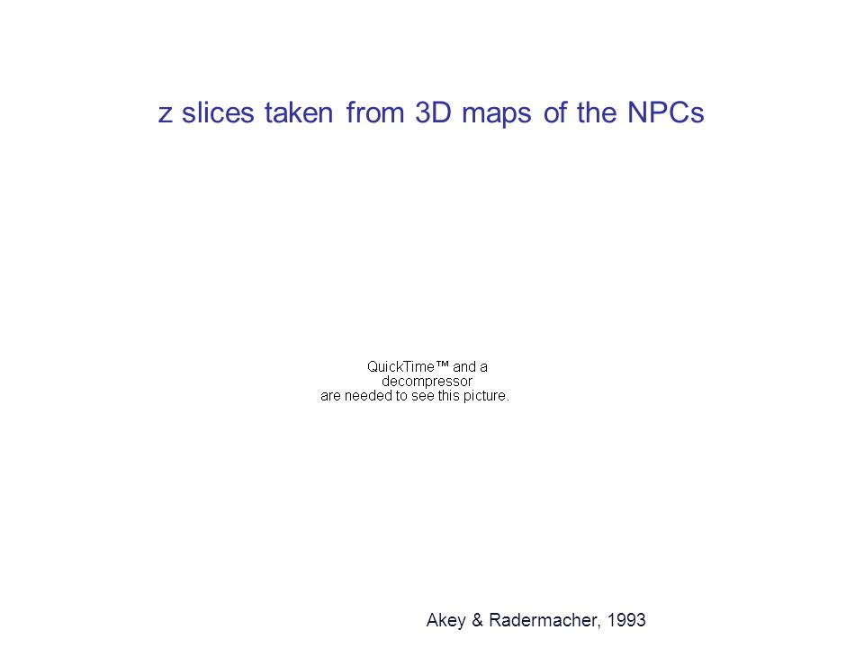 z slices taken from 3D maps of the NPCs Akey & Radermacher, 1993