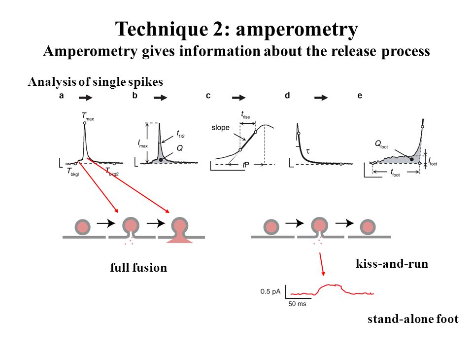 Technique 2: amperometry Amperometry gives information about the release process Analysis of single spikes stand-alone foot kiss-and-run full fusion
