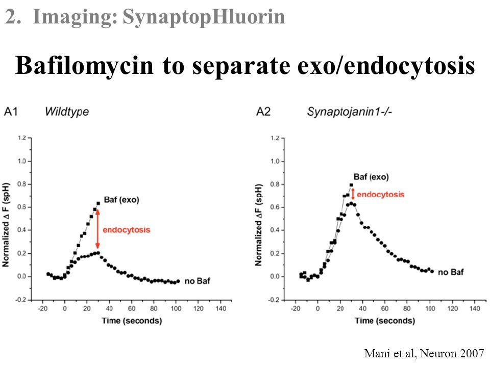 2. Imaging: SynaptopHluorin Bafilomycin to separate exo/endocytosis Mani et al, Neuron 2007
