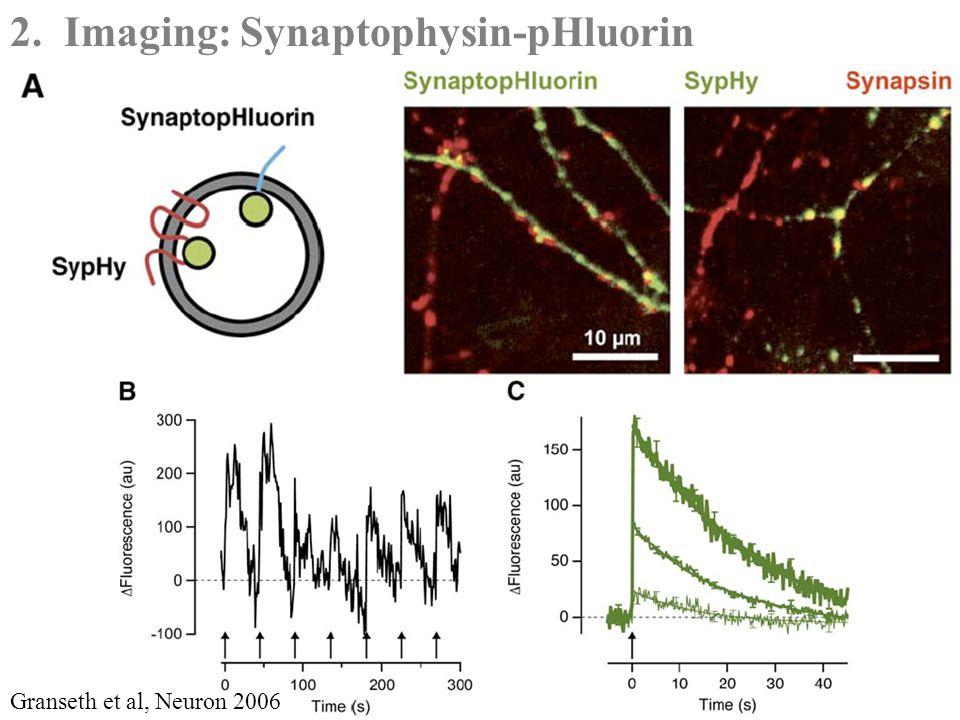 2. Imaging: Synaptophysin-pHluorin Granseth et al, Neuron 2006