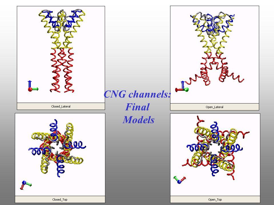 CNG channels: Final Models