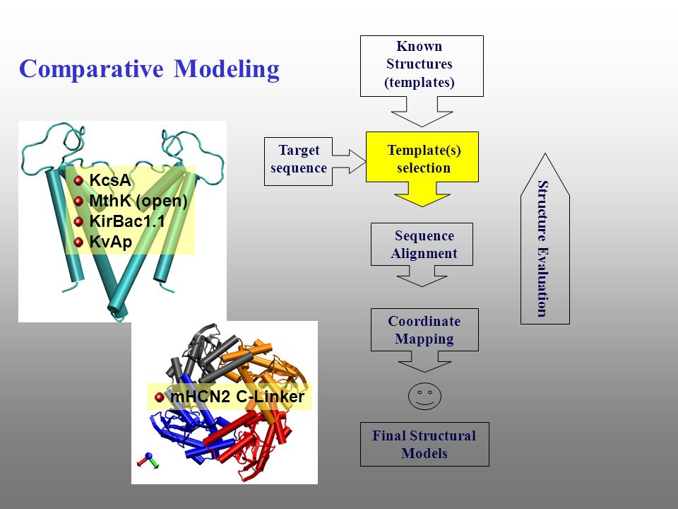 Known Structures (templates) Sequence Alignment Coordinate Mapping Structure Evaluation Final Structural Models Target sequence Comparative Modeling Template(s) selection KcsA MthK (open) KirBac1.1 KvAp mHCN2 C-Linker