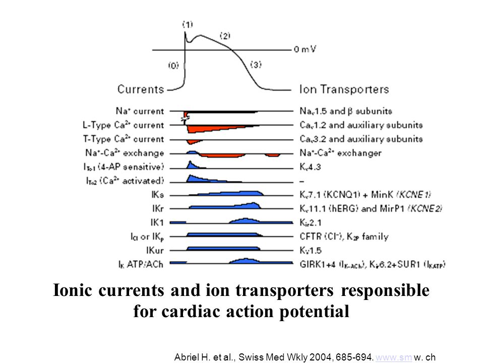 Abriel H. et al., Swiss Med Wkly 2004, 685-694. www.sm w. chwww.sm Ionic currents and ion transporters responsible for cardiac action potential