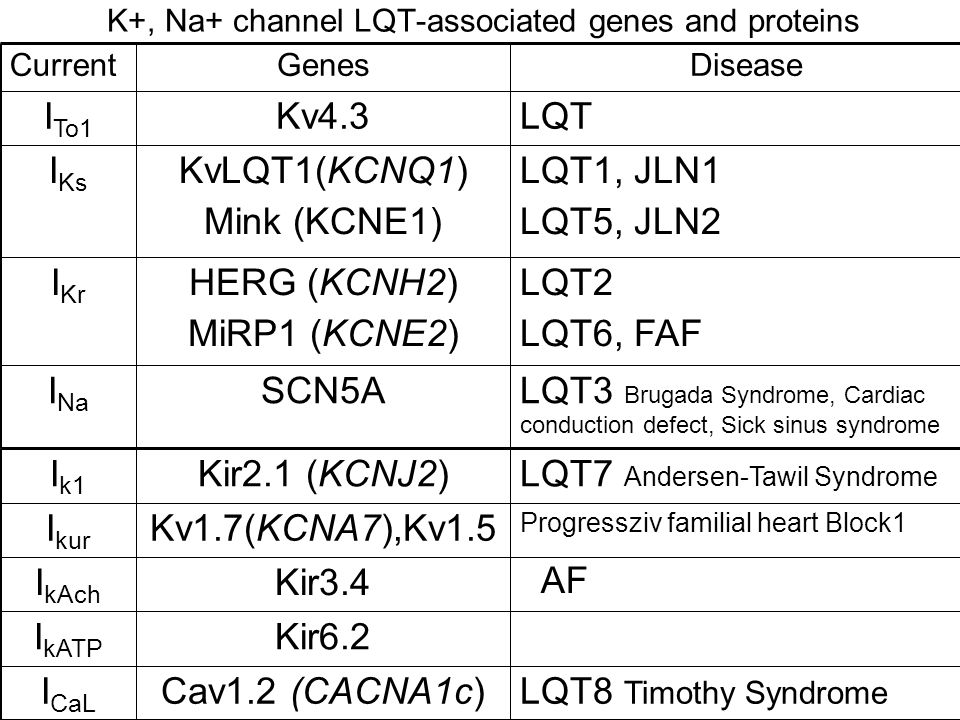 K+, Na+ channel LQT-associated genes and proteins LQT3 Brugada Syndrome, Cardiac conduction defect, Sick sinus syndrome SCN5AI Na LQT7 Andersen-Tawil