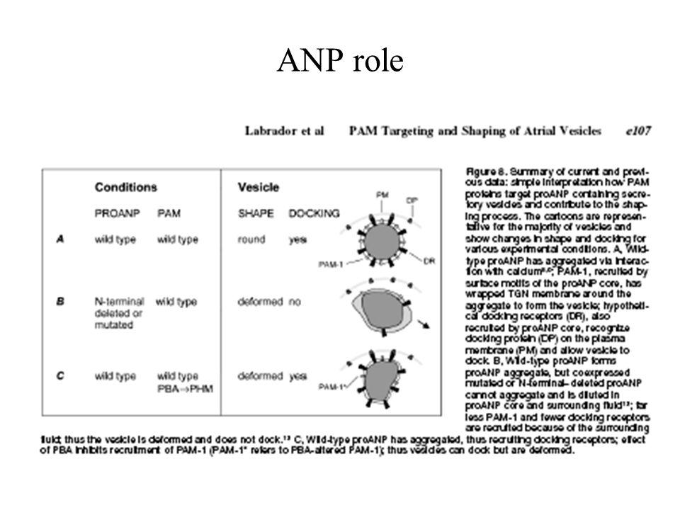 ANP role
