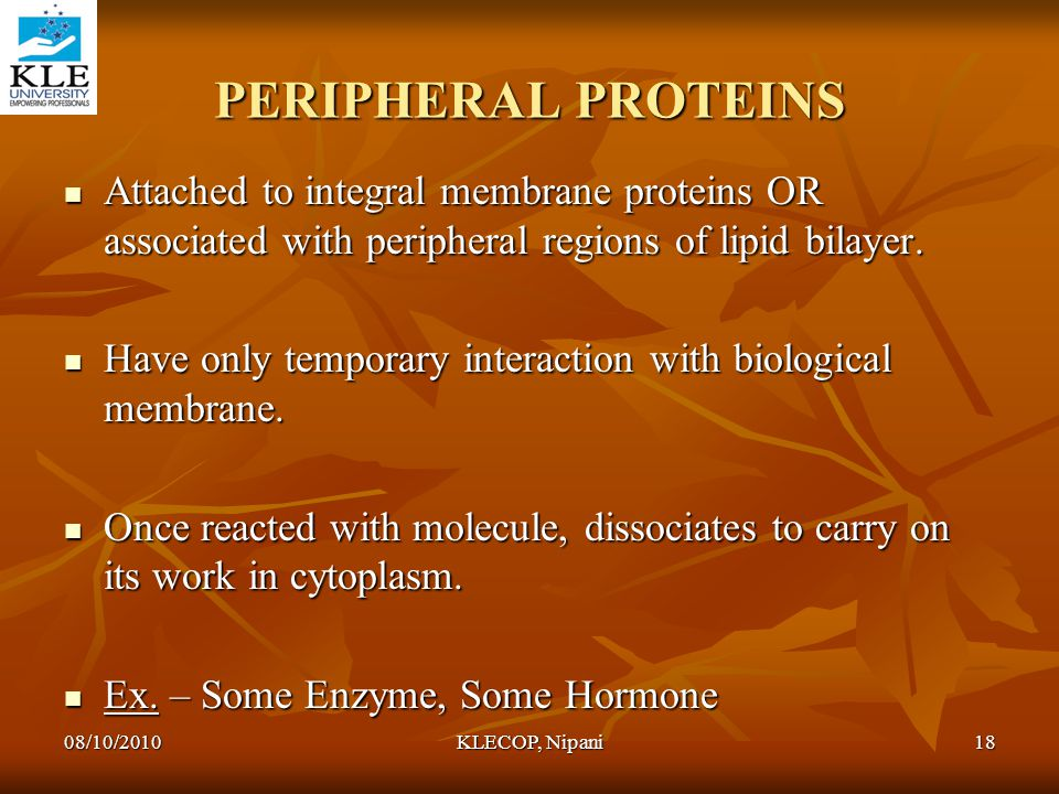 PERIPHERAL PROTEINS Attached to integral membrane proteins OR associated with peripheral regions of lipid bilayer. Attached to integral membrane prote