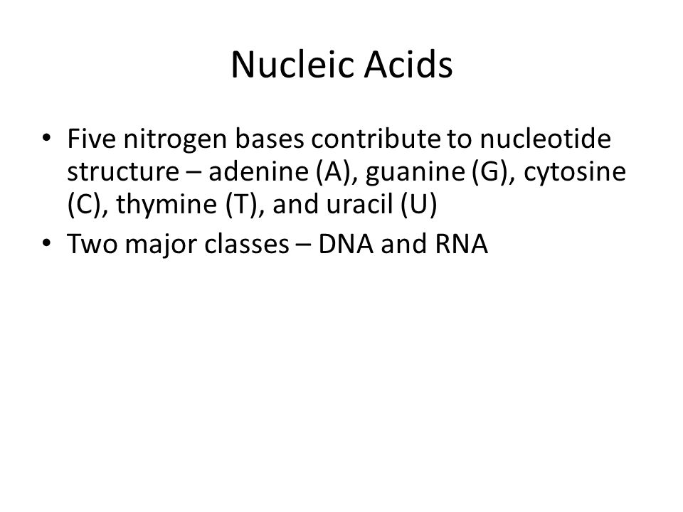 Nucleic Acids Five nitrogen bases contribute to nucleotide structure – adenine (A), guanine (G), cytosine (C), thymine (T), and uracil (U) Two major classes – DNA and RNA