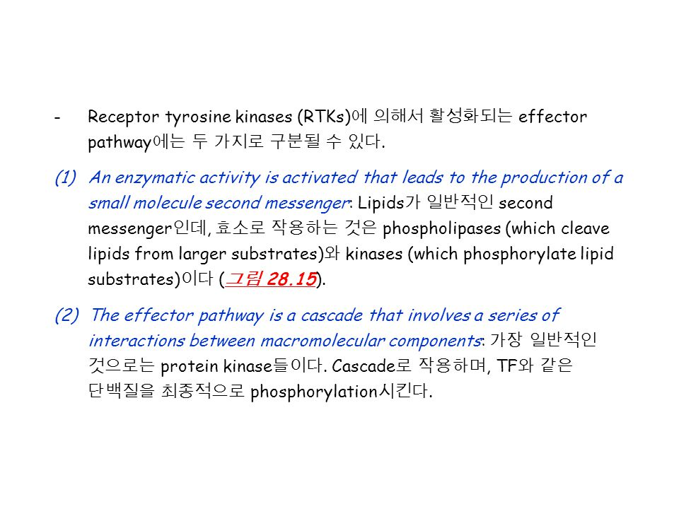 -Receptor tyrosine kinases (RTKs) 에 의해서 활성화되는 effector pathway 에는 두 가지로 구분될 수 있다. (1)An enzymatic activity is activated that leads to the production o