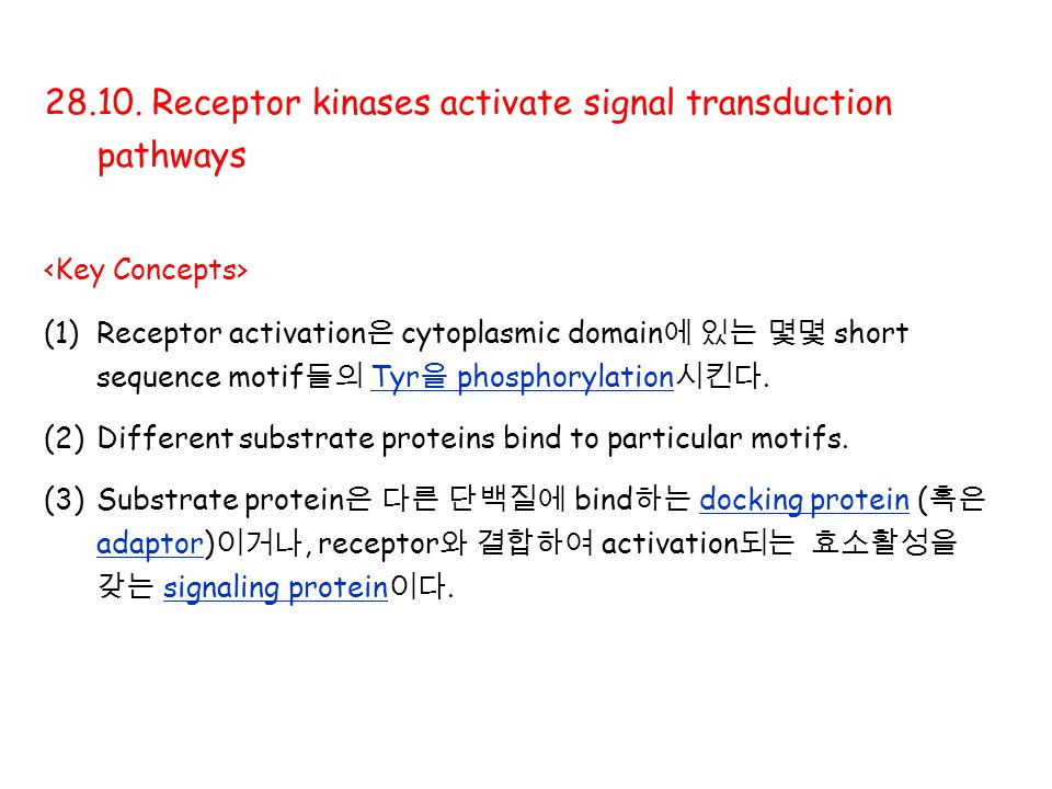 28.10. Receptor kinases activate signal transduction pathways (1)Receptor activation 은 cytoplasmic domain 에 있는 몇몇 short sequence motif 들의 Tyr 을 phosph