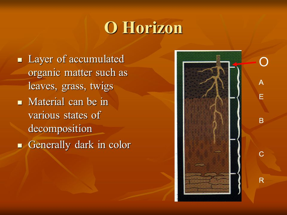 O Horizon Layer of accumulated organic matter such as leaves, grass, twigs Layer of accumulated organic matter such as leaves, grass, twigs Material c