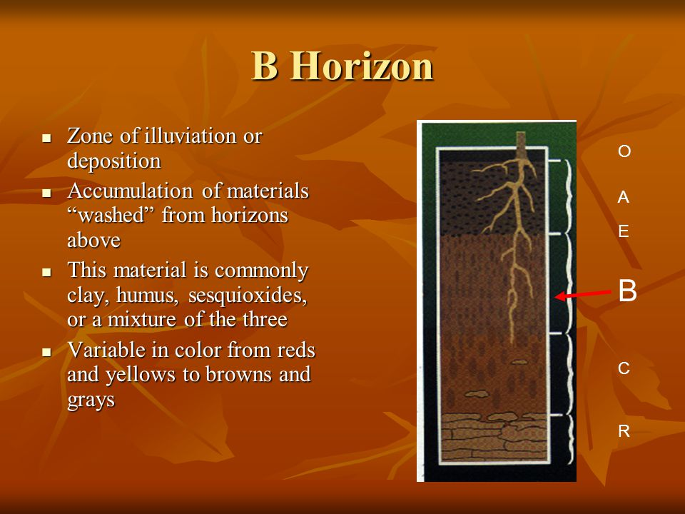 "B Horizon Zone of illuviation or deposition Zone of illuviation or deposition Accumulation of materials ""washed"" from horizons above Accumulation of m"