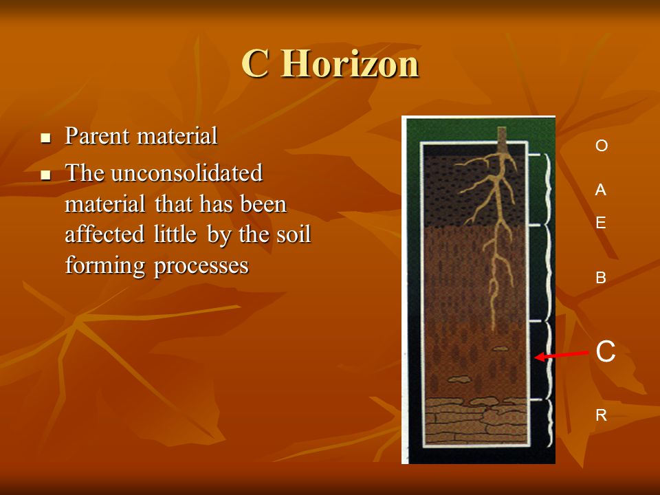 C Horizon Parent material Parent material The unconsolidated material that has been affected little by the soil forming processes The unconsolidated material that has been affected little by the soil forming processes A E B C R O
