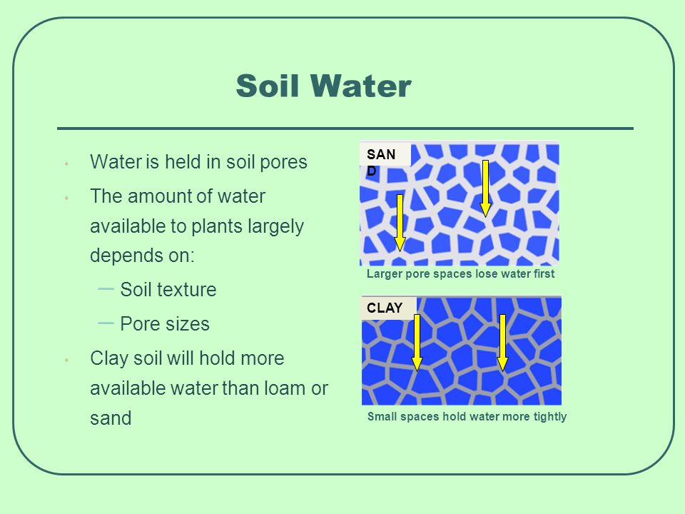 Soil Water Water is held in soil pores The amount of water available to plants largely depends on: – Soil texture – Pore sizes Clay soil will hold more available water than loam or sand SAN D Larger pore spaces lose water first CLAY Small spaces hold water more tightly