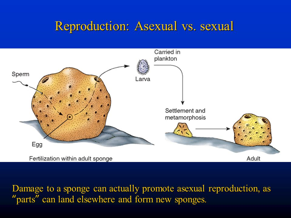 Reproduction: Asexual vs.