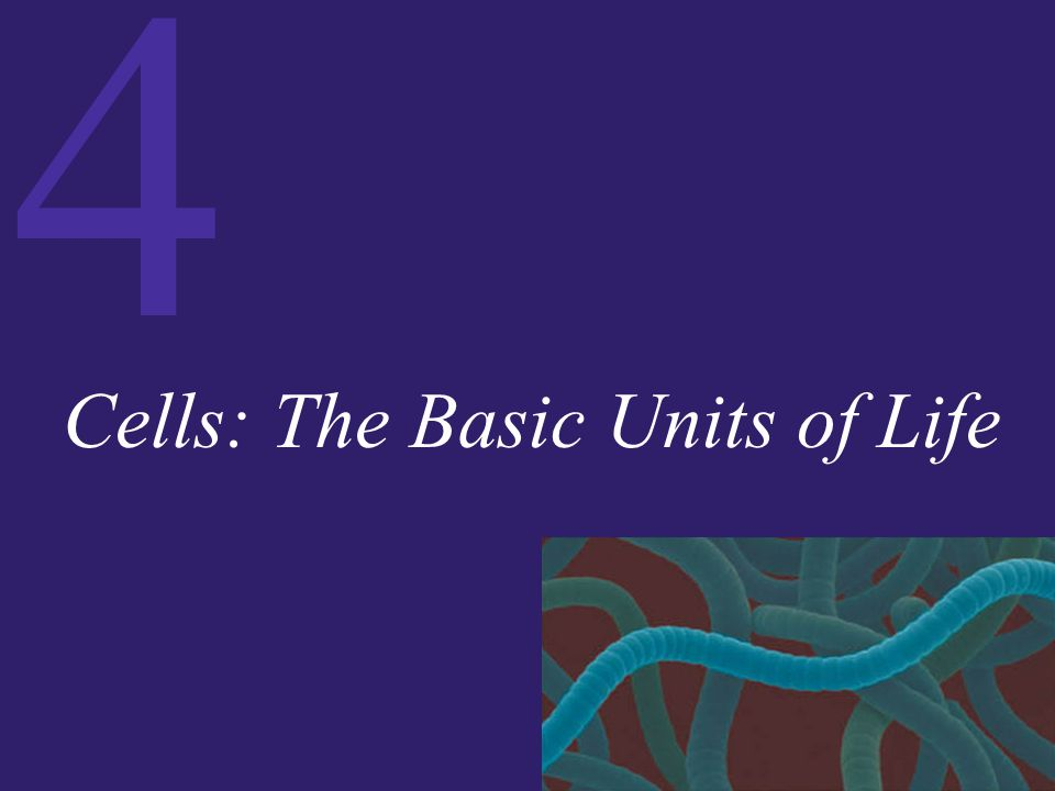 4 The Cell: The Basic Unit of Life Every cell is surrounded by a plasma membrane, a continuous membrane composed of a lipid bilayer with proteins floating within it and protruding from it.
