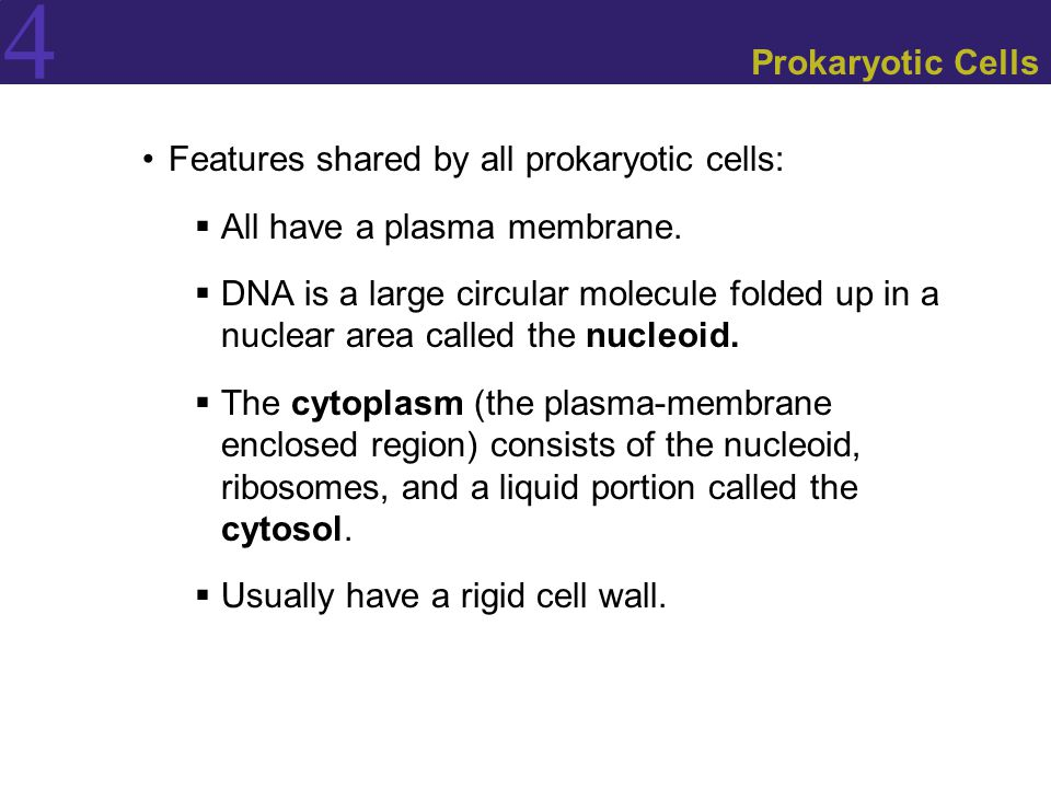 4 Prokaryotic Cells Features shared by all prokaryotic cells:  All have a plasma membrane.  DNA is a large circular molecule folded up in a nuclear