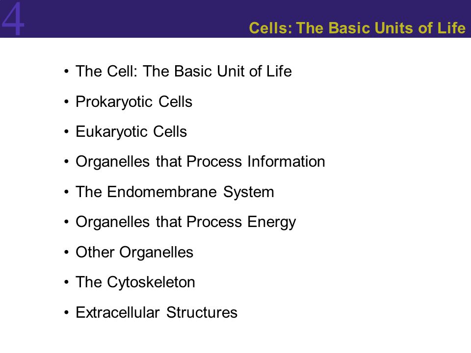 4 The Cell: The Basic Unit of Life Roles of the plasma membrane:  Acts as a selectively permeable barrier.