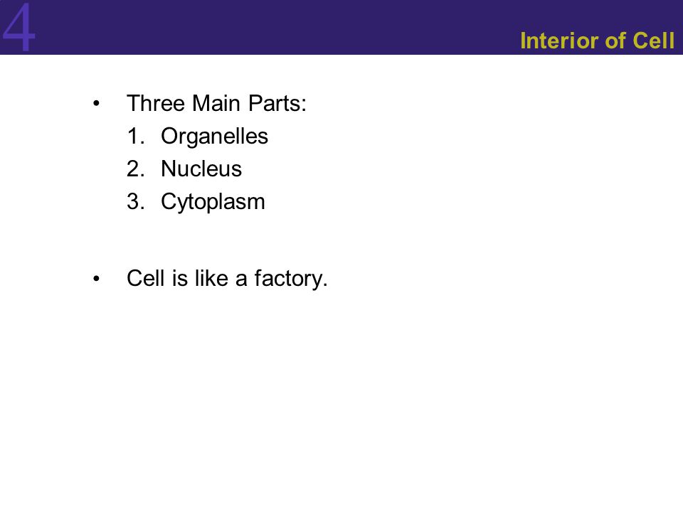 4 Interior of Cell Three Main Parts: 1.Organelles 2.Nucleus 3.Cytoplasm Cell is like a factory.