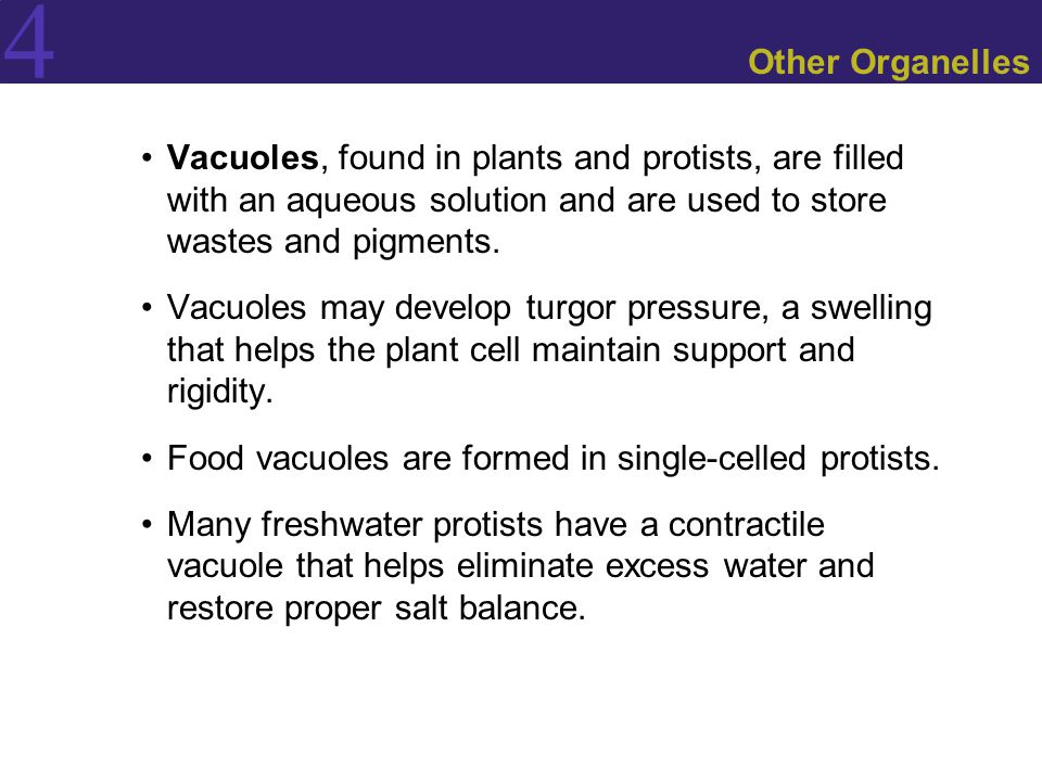 4 Other Organelles Vacuoles, found in plants and protists, are filled with an aqueous solution and are used to store wastes and pigments. Vacuoles may