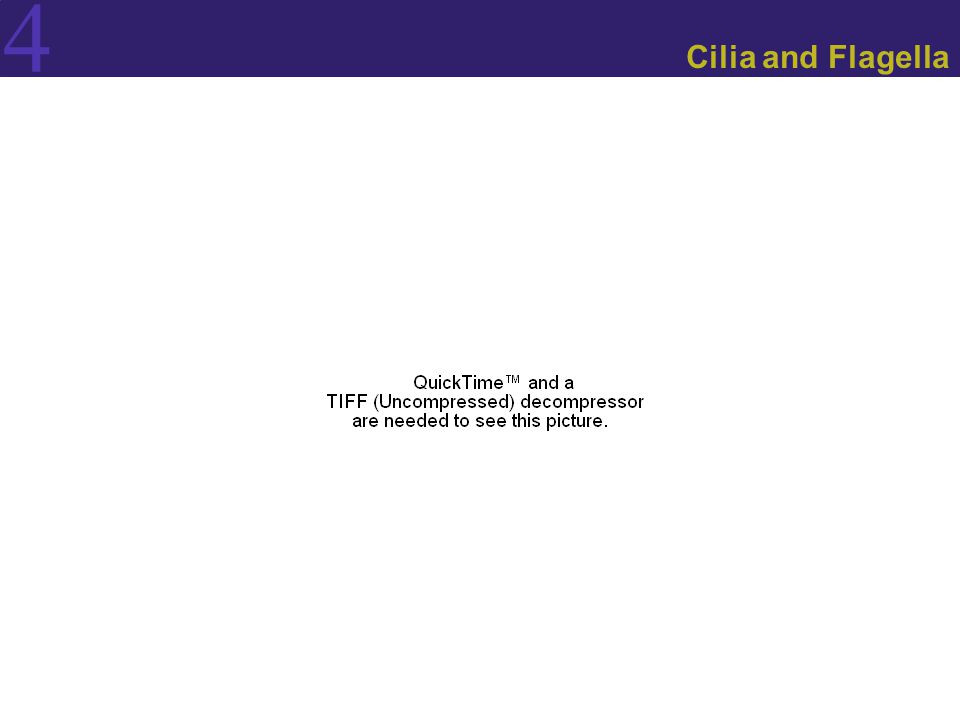 4 Cilia and Flagella