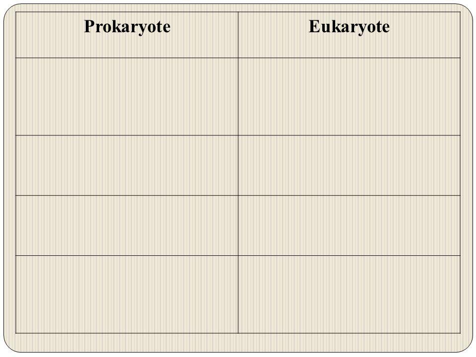 ProkaryoteEukaryote