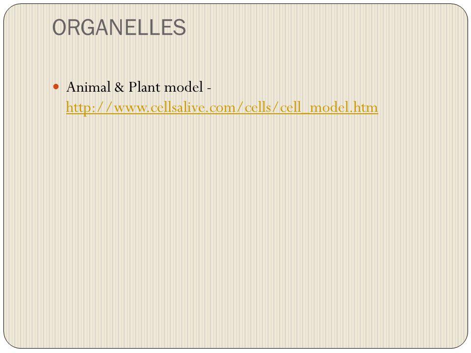 ORGANELLES Animal & Plant model - http://www.cellsalive.com/cells/cell_model.htm http://www.cellsalive.com/cells/cell_model.htm