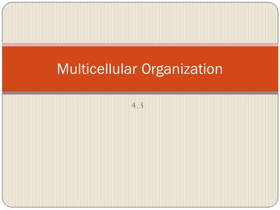 4.3 Multicellular Organization