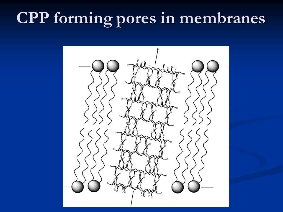CPP forming pores in membranes