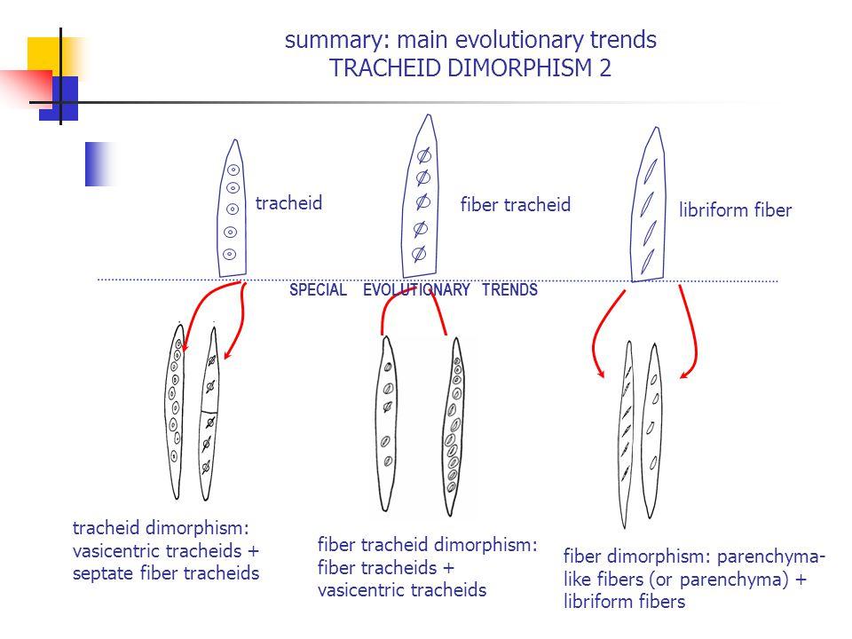 summary: main evolutionary trends TRACHEID DIMORPHISM 2 tracheid dimorphism: vasicentric tracheids + septate fiber tracheids fiber tracheid dimorphism: fiber tracheids + vasicentric tracheids libriform fiber fiber dimorphism: parenchyma- like fibers (or parenchyma) + libriform fibers fiber tracheid tracheid SPECIAL EVOLUTIONARY TRENDS