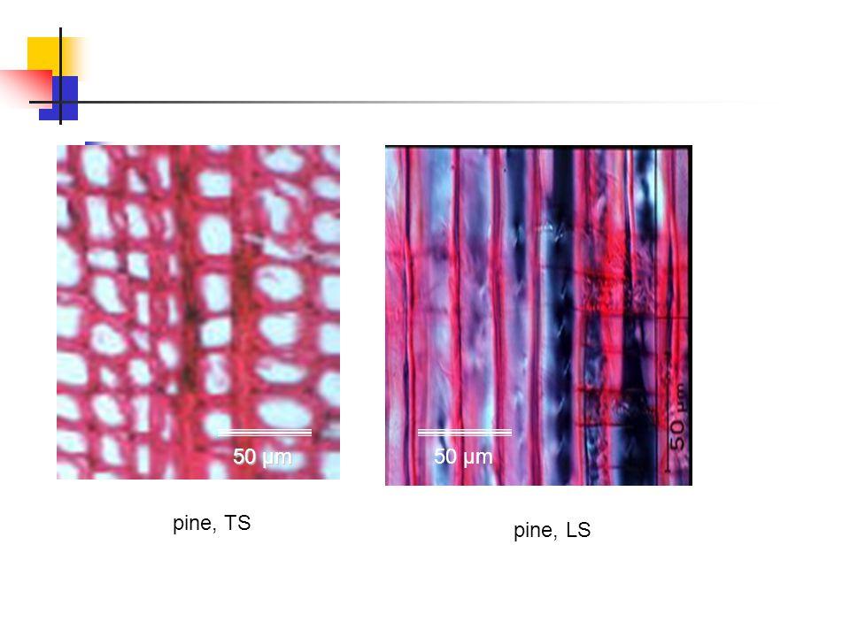 pine, TS pine, LS 50 µm