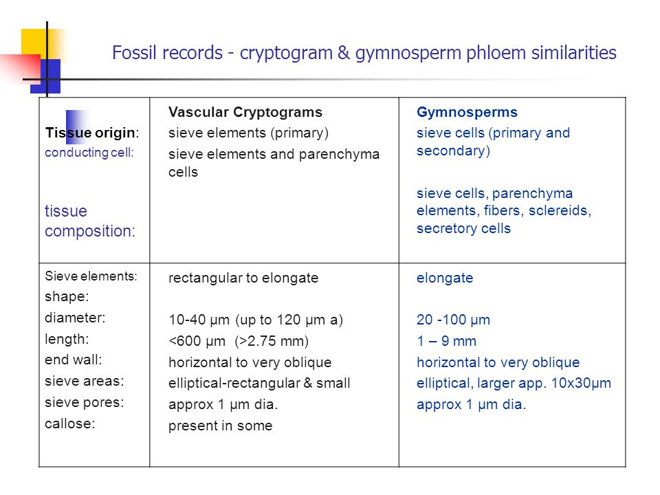Fossil records - cryptogram & gymnosperm phloem similarities Tissue origin: conducting cell: tissue composition: Vascular Cryptograms sieve elements (