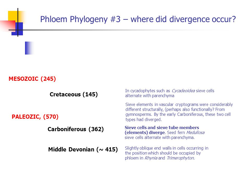 Phloem Phylogeny #3 – where did divergence occur? Sieve elements in vascular cryptograms were considerably different structurally, (perhaps also funct
